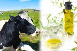 油を摂るなら、動物?or 植物? コレステロールがもつ善悪の分け方